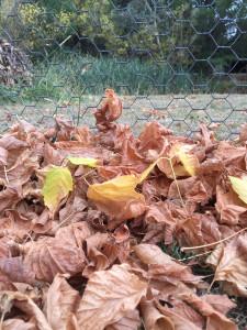 leaves final